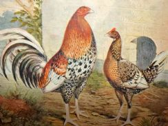 1st November 2018. Wright & Cassell Poultry Prints